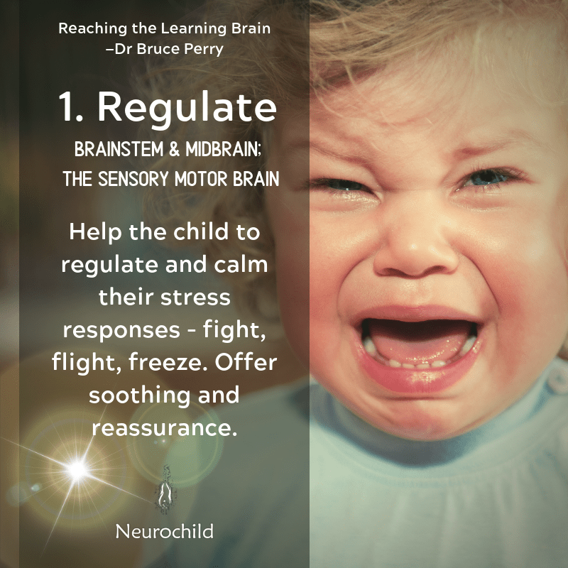 regulate the nervous system